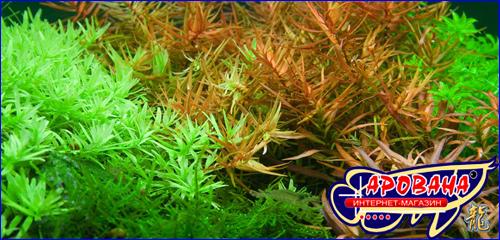 Удобрение Удо Ермолаева, микроэлементы удобрение для аквариумных растений Микро-Удобрения.