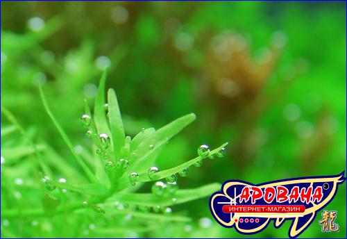 ТМ Удо Ермолаева Микро-Удобрения для аквариумных растений, микроэлементы.
