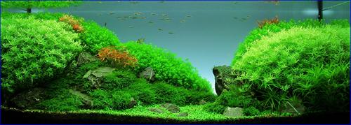 ТМ Удо Ермолаева удобрение для аквариумных растений, макроэлементы - инструкция применения.