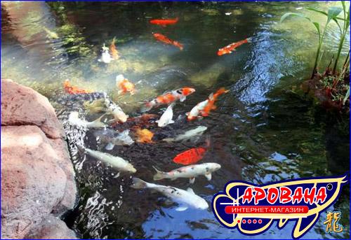 Кои МИНИ 2200 ml, - корм для подрастающих прудовых рыб.