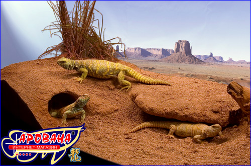 Zoo Med Excavator Clay Burrowing Substrate 2.25 кг, - субстрат для роющих животных.
